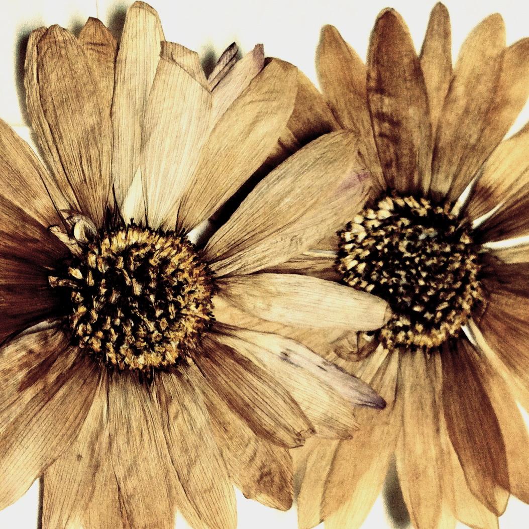 Allen Ginsberg, Sunflower Sutra(1955)